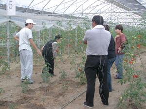 『共生を考える会』により立ち上げられた農業事業(福島県いわき市での有機野菜栽培の様子)