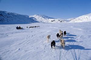 グリーンランド東海岸犬橇の旅
