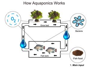 「アクアポニックス」の循環システムのイメージ。水耕栽培と魚の養殖を制御しながら循環させることで、最適な水質を維持できる(提供:ホリマサシティファーム)