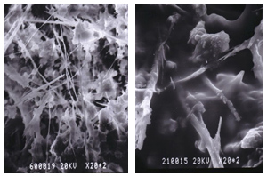 左は対策前のアスベストの顕微鏡検査画像。右はCAS工法による対策後の画像