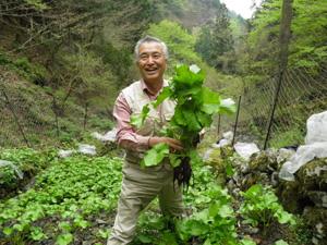 江戸東京野菜コンシェルジュ協会が主催する収穫体験で奥多摩わさびを収穫